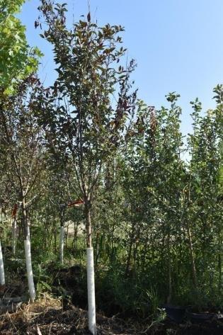 Fall Tree Auction