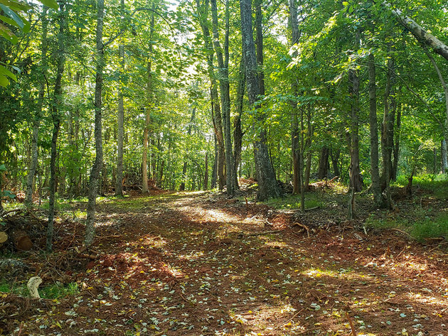 10 Acre Lot in Forest