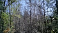 56 ACRES - FAIRFIELD COUNTY, SC