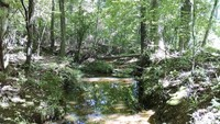 82.79 ACRES - RICHLAND COUNTY, SC