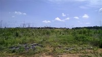 145 ACRES - RICHLAND COUNTY, SC