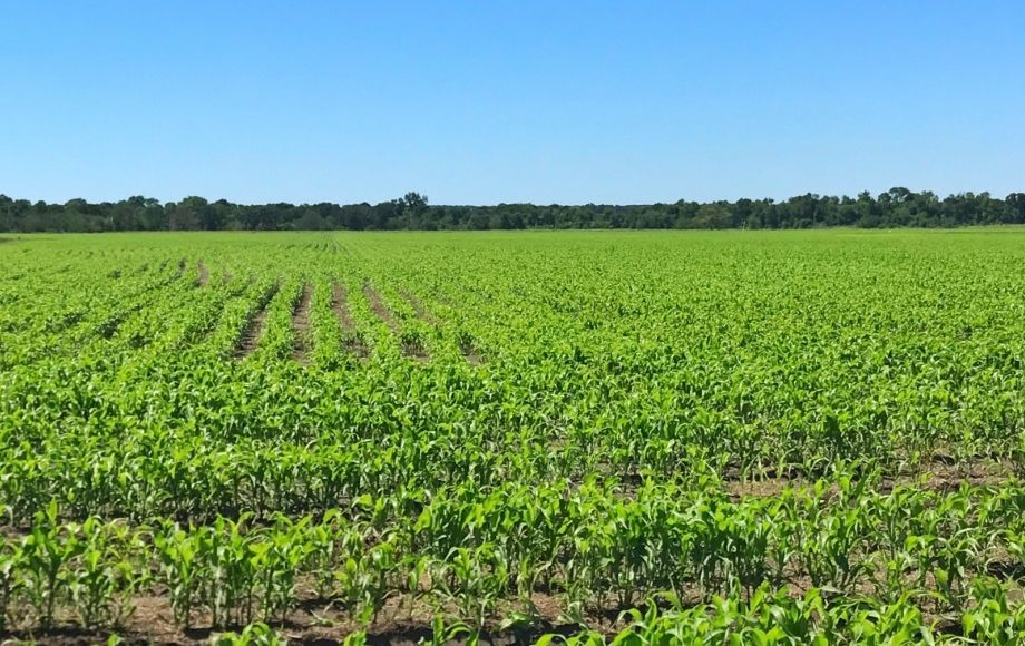 Featured Image for 11,831 +/-  Acres of East Texas Farm & Ranch Land