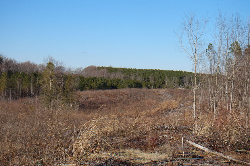 Featured Image for 26 +/- Acres of Raw Land in Spotsylvania County, VA Selling at or Above $25,000!!  ONLINE BIDDING ONLY