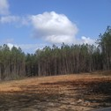 154.8 Acres - Blackstock Community - Chester County, SC