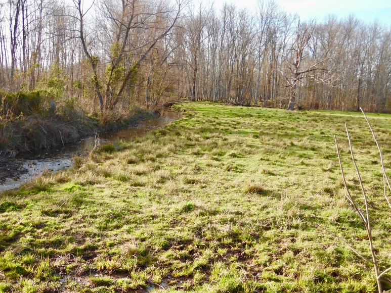 Featured Image for 69.5 +/- Acres of Beautiful Land w/Barn, Fencing, Pond & Creek in Culpeper County, VA