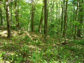 109 ACRES - CHESTER COUNTY, SC
