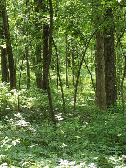 Featured Image for 4.2 +/- Acre Wooded Building Lot w/Well--Selling to the Highest Bidder!!