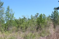 138.5 ACRES - WILLIAMSBURG COUNTY, SC