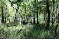 120 ACRES - FAIRFIELD COUNTY, SC