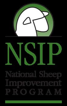 Eastern NSIP Sheep Sale