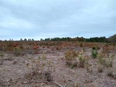 50 ACRES - KERSHAW COUNTY, SC