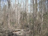 50 Acres - Chesterfield County