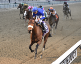 FOR SALE – Percentage of Future Breeder's Awards for Two New York Racehorses!