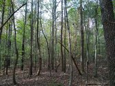 55 ACRES - NEWBERRY COUNTY, SC