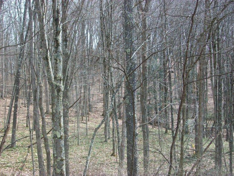 Image for LAND AUCTION: 40+/- ACRES IN ELKINS, WV