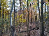 85 ACRES - FAIRFIELD COUNTY, SC