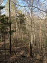 7.01 ACRES - FAIRFIELD COUNTY, SC