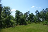 BUCKRIDGE FARM - Recreational Sportsman's Tract