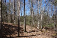 150.01 ACRES - YORK COUNTY, SC