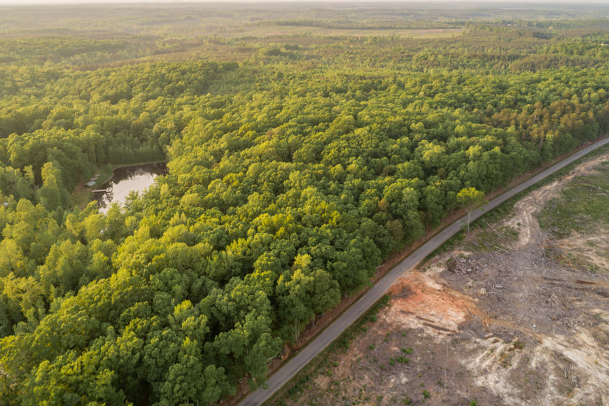 Featured Image for 46.5 +/- Acres of Timber Land in Lunenburg County, VA
