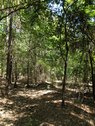 8.62 ACRES - FAIRFIELD COUNTY, SC