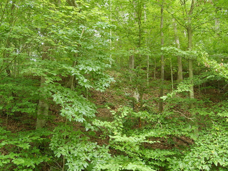 7.9 +/- Acre Wooded Parcel w/Easement Off of Crowell Lane in Culpeper, VA