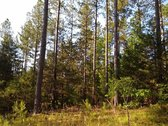 227 ACRES - FAIRFIELD COUNTY, SC