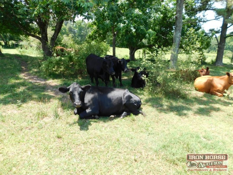 Cattle, Furniture, Appliances, Home Decorations and Much More