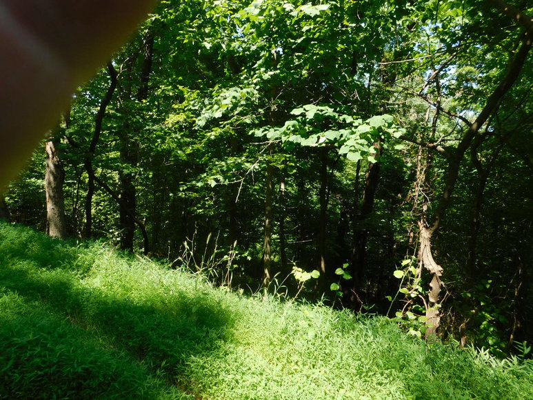 Image for 16.17 +/- Acres of Buildable Land in Madison County, VA