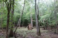 42 ACRES - TRACT D