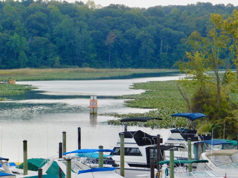 Image for Wooded Waterfront Building Lot in Gated Community--North Stafford County, VA