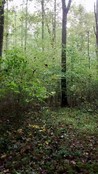 Image for 6.1 +/- Acre Building Lot w/4 BR Perk Site in Madison County, VA--SELLS to the HIGHEST BIDDER via ONLINE ONLY BIDDING!!