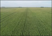 CLOSED  - Pocahontas Co., IA - 126.66 Ac., m/l (040-0245-01)