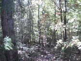 31 ACRES - CHESTER COUNTY, SC
