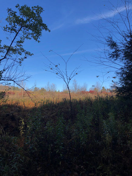 Sealed Bid Land Auction - Canton, PA - Lycoming County