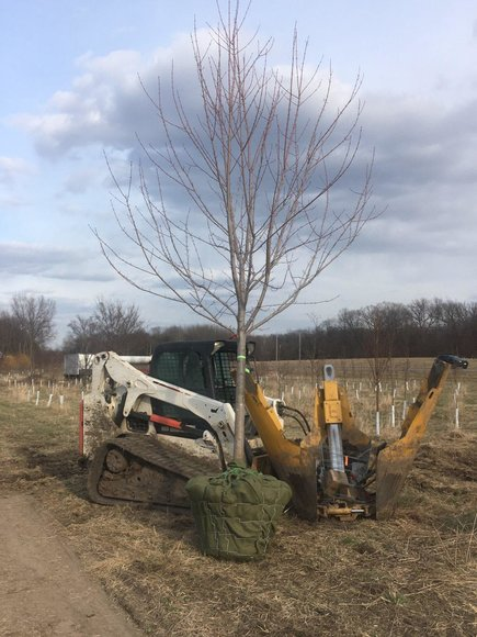 Opening Soon Tree Auction