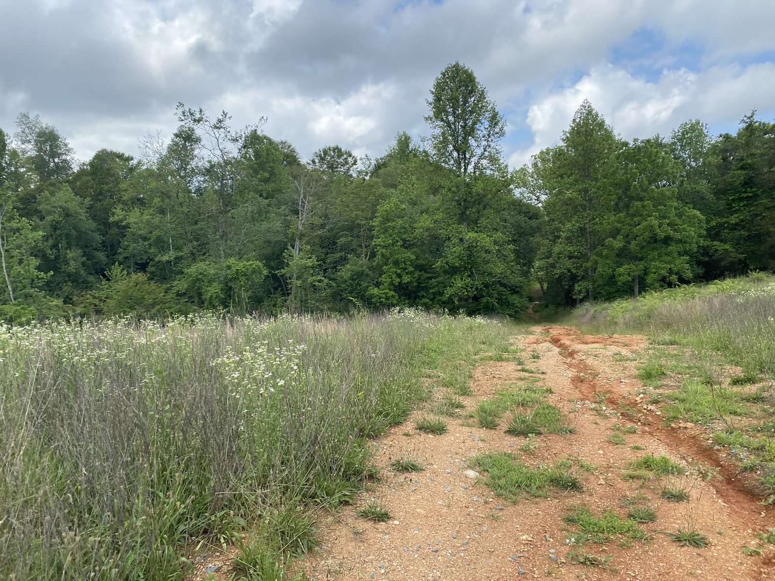 Image for 6 Tracts of Contiguous Raw Land Totaling 267 +/- Acres in Albemarle & Louisa Counties
