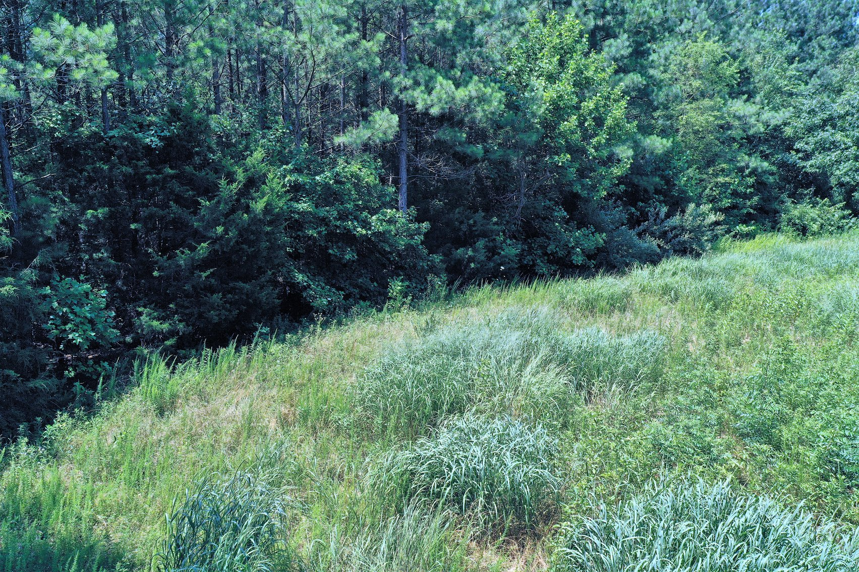 Image for 99 Acres of Timberland in Lunenburg County, VA