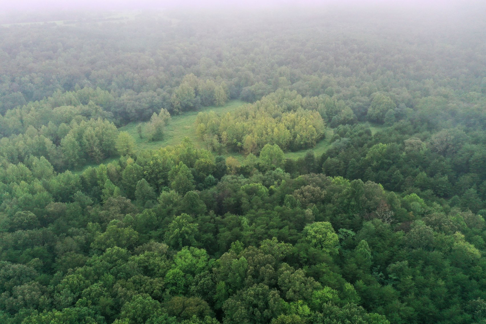 Image for 365 +/- Contiguous Acres of Land Offered in 3 Tracts Featuring Timber, Pasture & 5,600' +/- of River Frontage--Campbell County, VA
