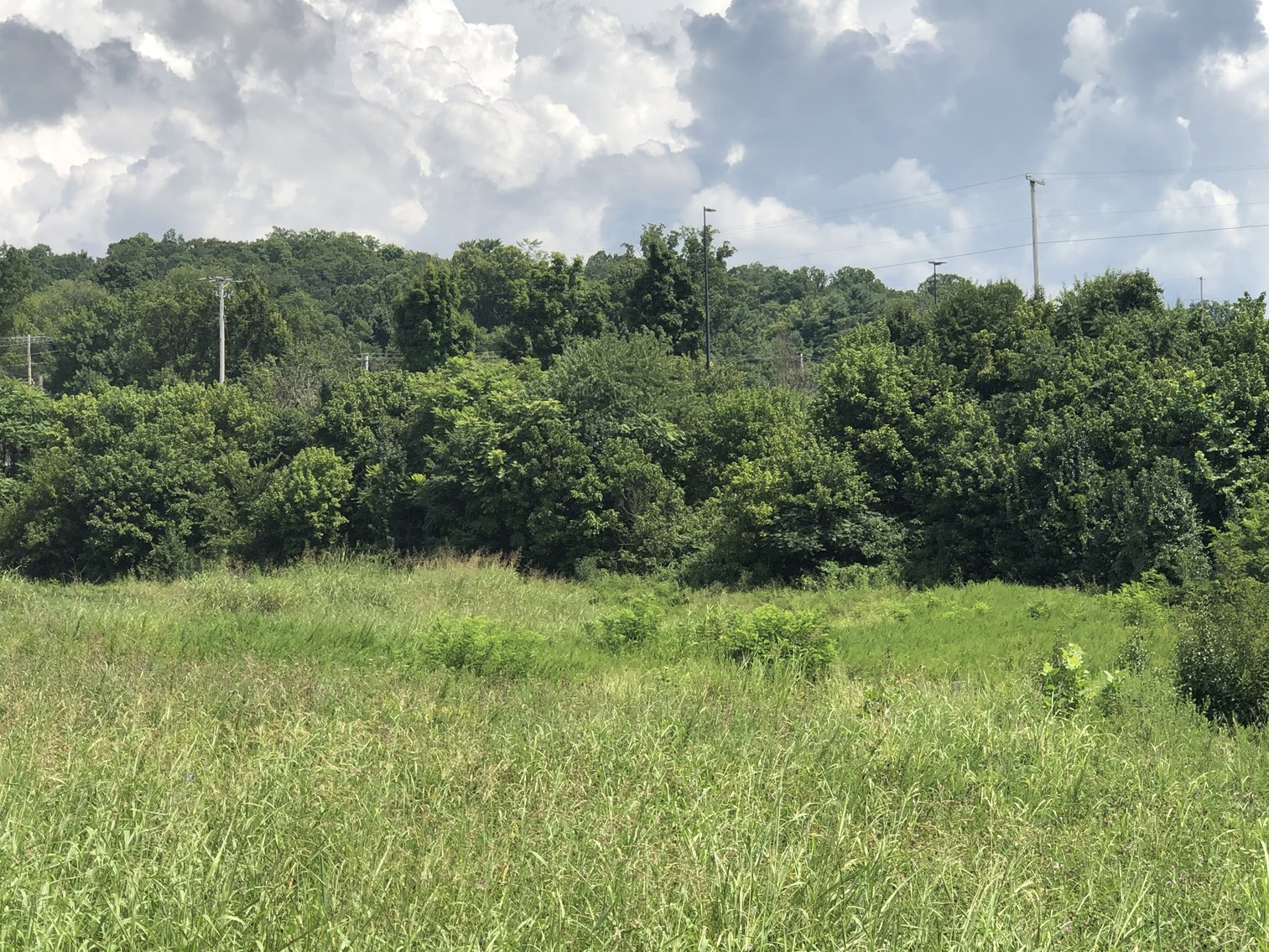 Image for REAL ESTATE AUCTION: 4 Lots (Kingsport, TN)