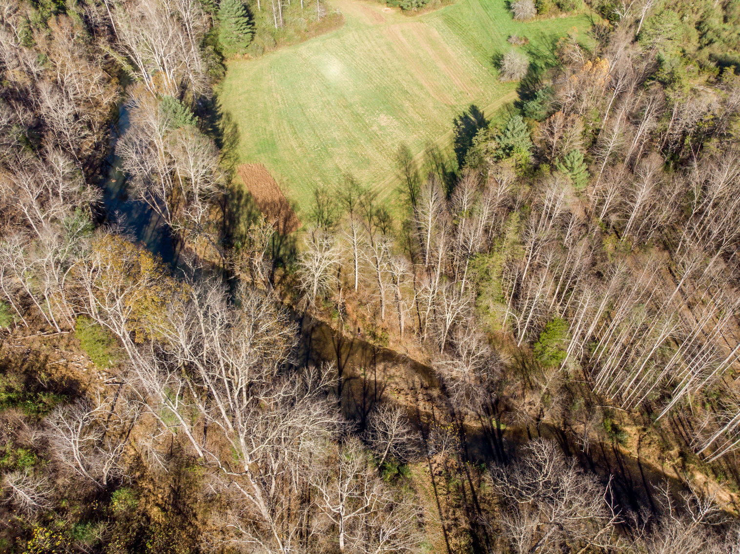Image for RIVERFRONT LAND AUCTION: 193.9± Acres in 2 Tracts (Rockbridge County, VA)