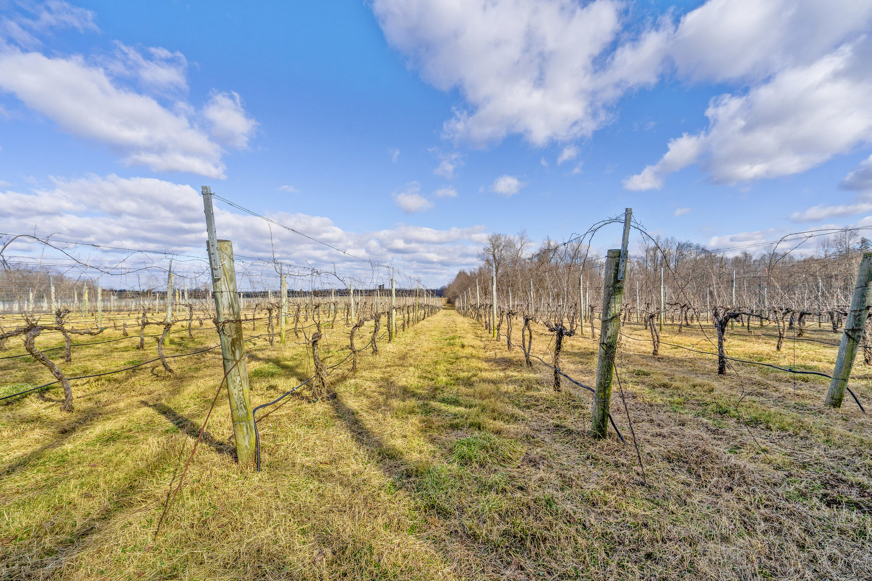 Image for 109 +/- Acres w/3 BR/2 BA  Farm House, Outbuildings & Grapevines/Vineyard--Essex County, VA