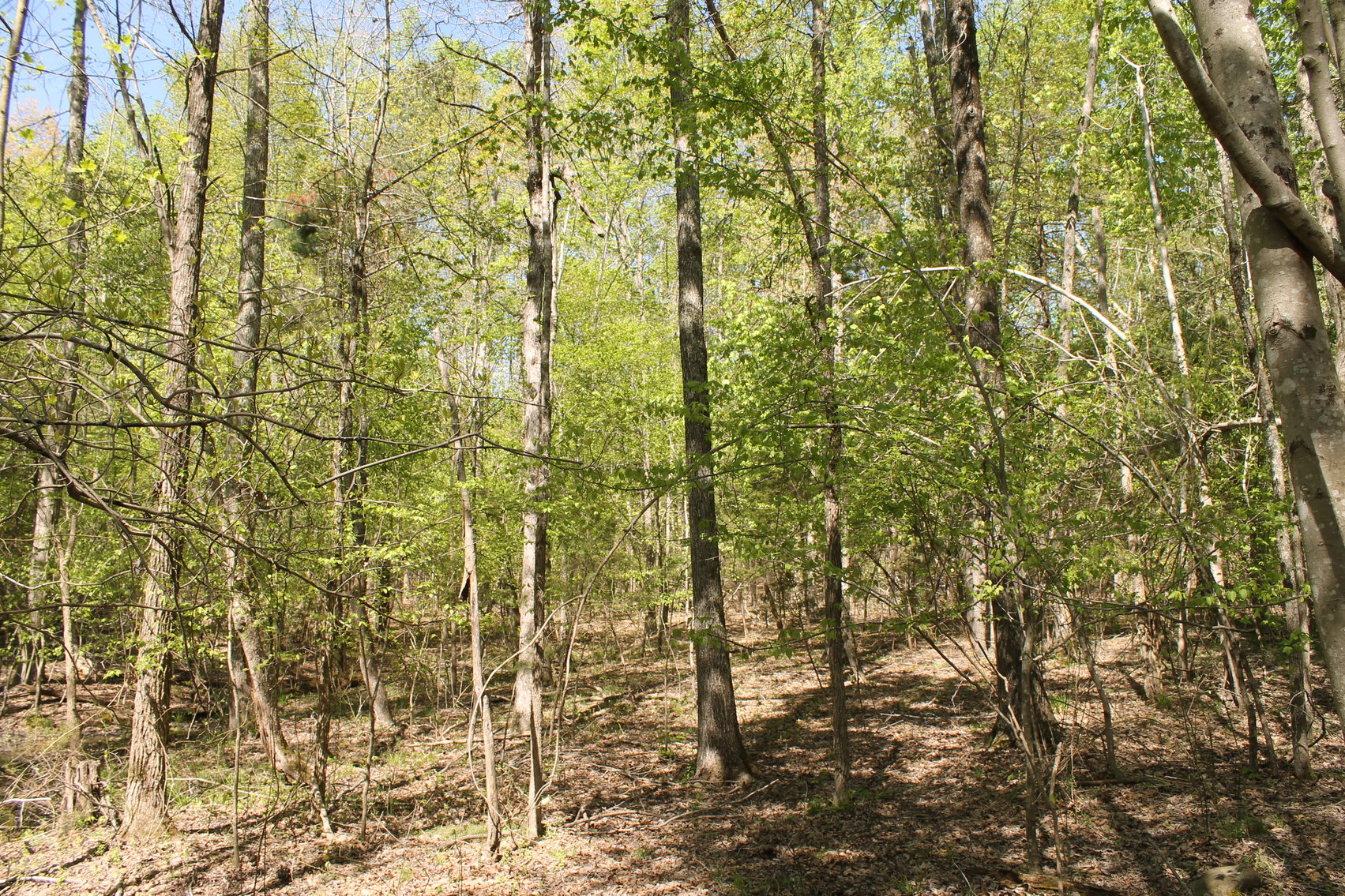 Image for 118 +/- Acres of Timber & Fenced Pasture Land--Lunenburg County, VA