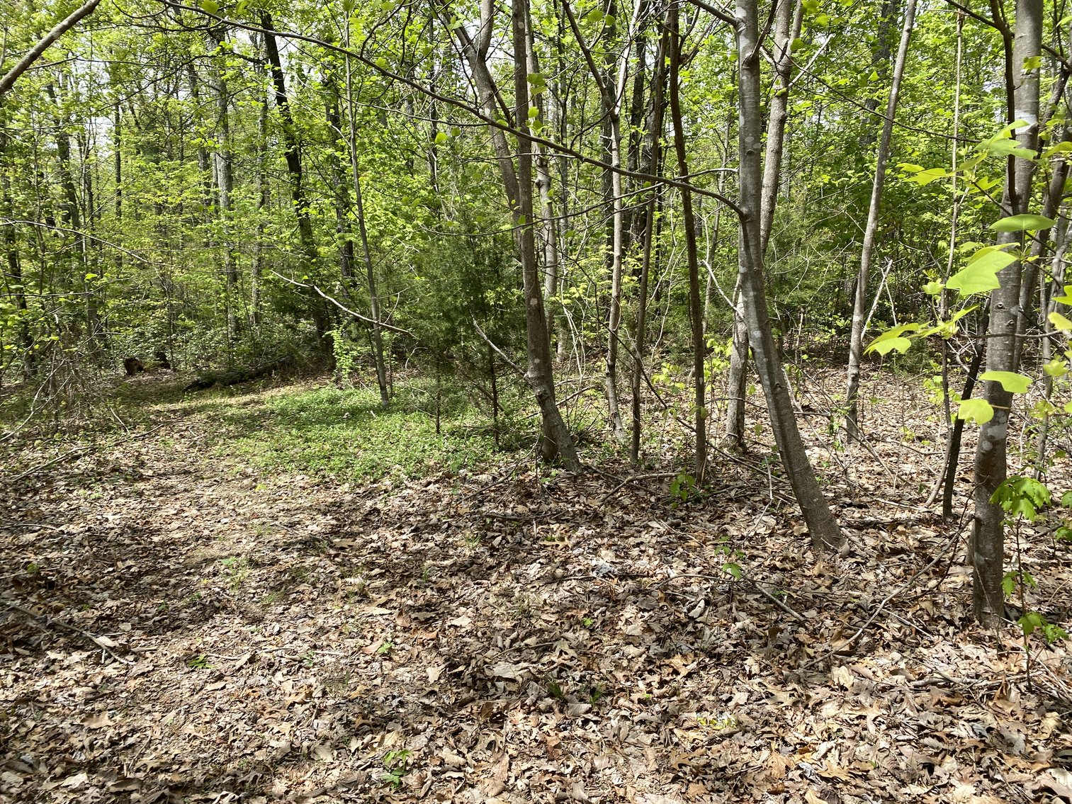 Image for 25.7 +/- Acres of Wooded Land in Madison County, VA--SELLS to the HIGHEST BIDDER!!