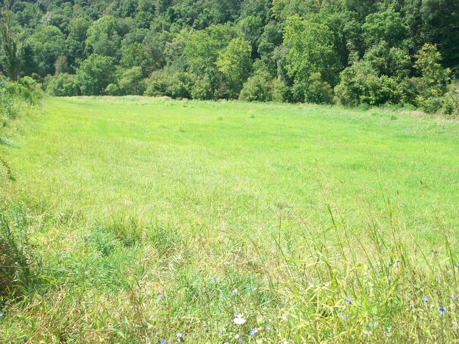 Image for ABSOLUTE FORECLOSURE AUCTION - Arnoldsburg WV