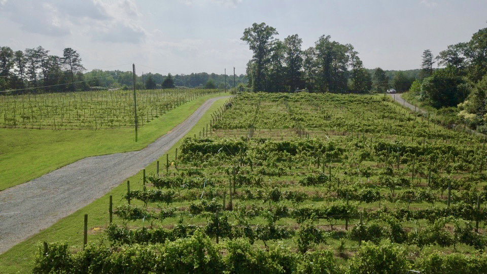 Image for 61.8 +/- Acre Farm/Winery/Vineyard w/Modern Production/Tasting Building in Orange County, VA