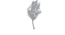 SilverBirch Hotels & Resorts