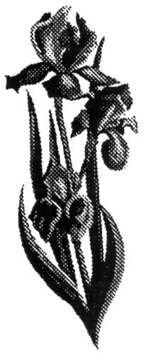 SCHIZOPHRENIA SOCIETY OF CANAD