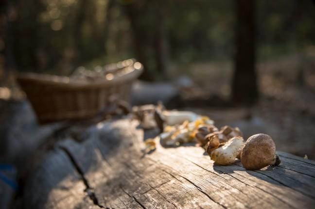 1_mushroomsbark