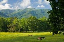 Cabin Rentals in Wears Valley TN